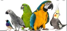 mali mizah fıkra papağanın üstat olanı makbul